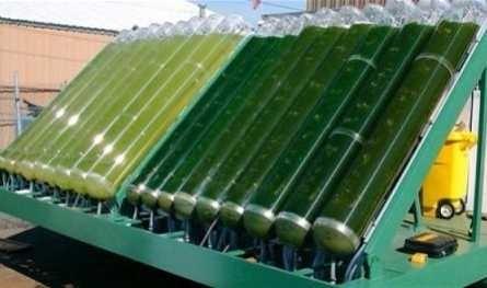 Lots of Algae