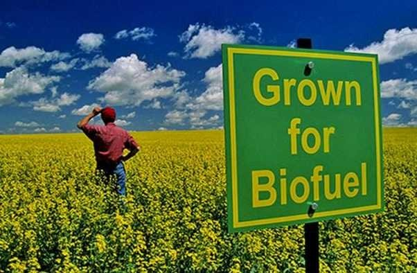Only for Biodiesel
