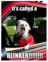 Using the Blinker