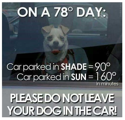 You'll be surprised how hot it can get in a car!