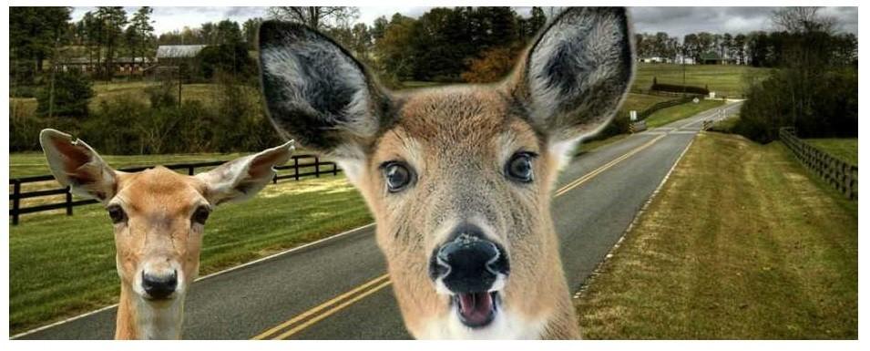 Hello, Deer!