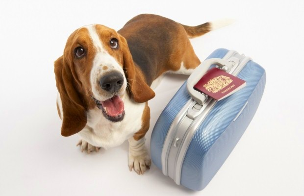 Vacation Dog